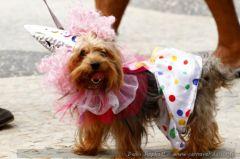 carnaval-chien-deguise-27.JPG